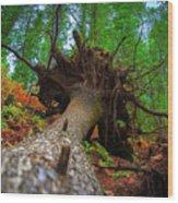 Tree Root Ball Wood Print