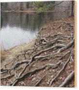 Tree Roots 2  Wood Print