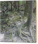 Tree Roots And Lithia Springs Wood Print