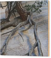 Tree Roots On The Tent Rock Wood Print