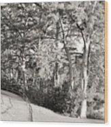 Tree Shaded Walkway Wood Print
