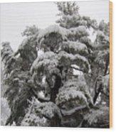Tree-sicle Wood Print