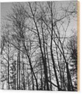 Tree Silhouette Bw Wood Print