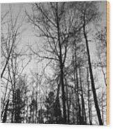 Tree Silhouette II Bw Wood Print