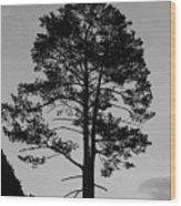 Tree Silhouette In The Dark Wood Print