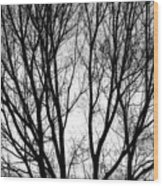 Tree Silhouettes In Black And White Wood Print