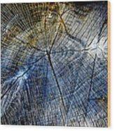 Tree Slab - 5025 Wood Print