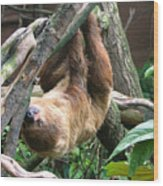 Tree Sloth Wood Print