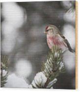 Tree Snow Sitter Wood Print