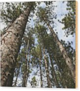Tree Stand Wood Print