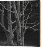 Beech Tree Wood Print