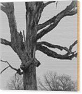 Tree Study Wood Print