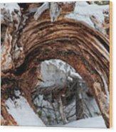 Tree Stump Arch Wood Print