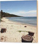 Tree Stumps On White Beach Wood Print