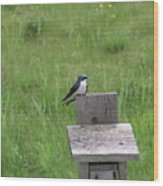 Tree Swallow 1 Wood Print
