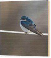 Tree Swallow  3708 Wood Print