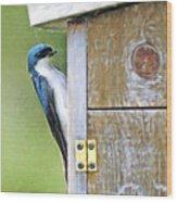 Tree Swallow At Nesting Box Wood Print