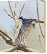 Tree Swallow In Flight Wood Print