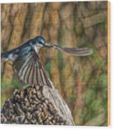 Tree Swallow Take Off Art Print By Ron Racine