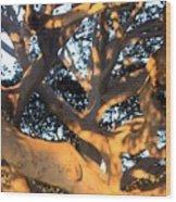 Tree Tangle 0551 Wood Print