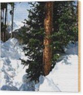 Tree Texture Wood Print