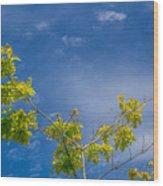 Tree To Sky II Wood Print