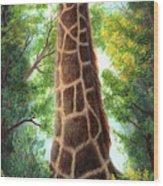 Tree Top Browser Wood Print