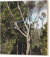 Tree Tops And Beyond Wood Print