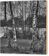 Tree Quartet And The Lake Wood Print