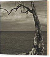 Tree Trunk-1-st Lucia Wood Print