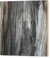 Tree Trunk Abstract Detail Wood Print