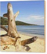 Tree Trunk On Beach Wood Print