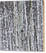 Tree Trunks Covered With Snow In Winter Wood Print