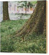 Tree Trunks In Spring Wood Print