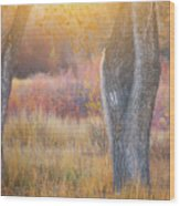 Tree Trunks In The Sunset Light Wood Print