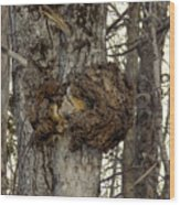 Tree Wart Wood Print