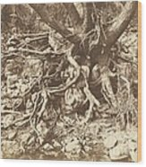 Tree With Tangle Of Roots Wood Print