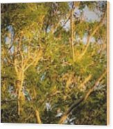 Tree With V Shaped Branches Wood Print