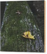 Tree With Yellow Leaf Wood Print