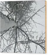 Tree Wrapped In Snow Wood Print
