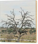 Tree009 Wood Print