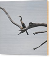 Treed Cormorant Wood Print