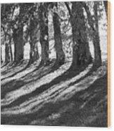 Treeline Wood Print