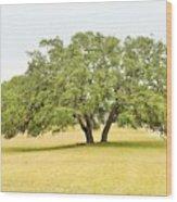 Trees 004 Wood Print