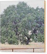Trees 006 Wood Print