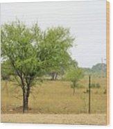 Trees 011 Wood Print