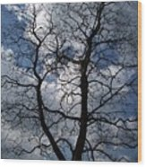 Trees 1 Wood Print
