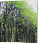 Trees Along The Umpqua River 2 Wood Print