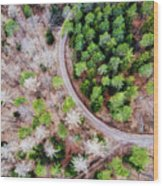 Trees And Path From Above Drone Photography Wood Print