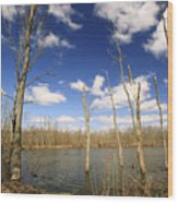 Trees And Sky Wood Print